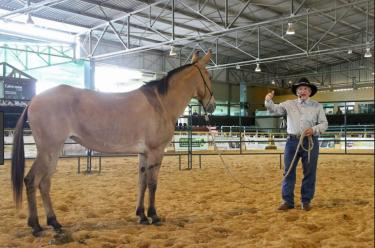 Steve Edwards, mule and donkey trainer, Hoosier Horse Fair