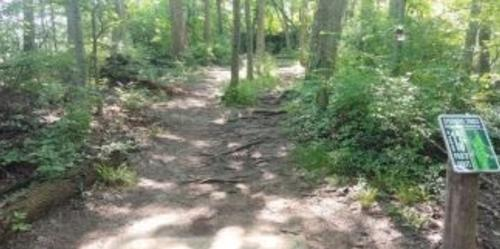 Forest Trail At Sycamore TrailsIn Miamisburg, OH
