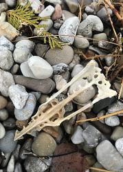 Carcass on Beach