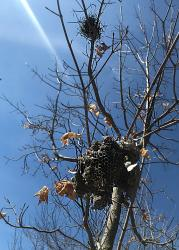 Wasp and Bird Nests