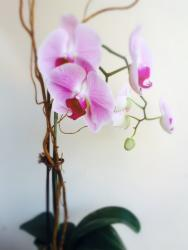 Orchid from Lavender Hill