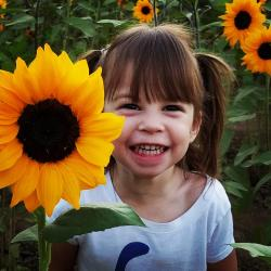 Schnepf Farms Sunflower Girl Instagram - Crowdriff