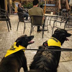 Floyd County Brewing Dogs