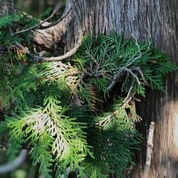 Trees of Sleeping Bear Dunes National Lakeshore