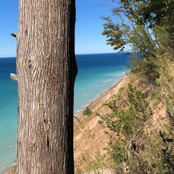 Unique Trees of the Sleeping Bear Dunes