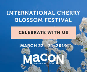 Cherry Blossom Digital Banner