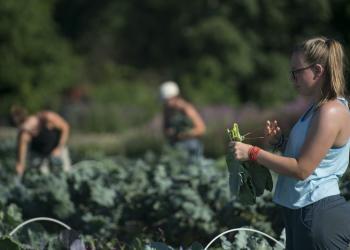 Douglas Graham Veggie Harvest