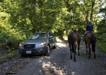 Horse - Western Loudoun