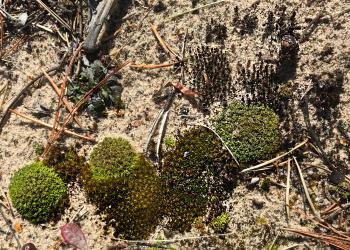 Moss on Beach