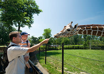 Buffalo Zoo giraffe Photo by NYS ESD