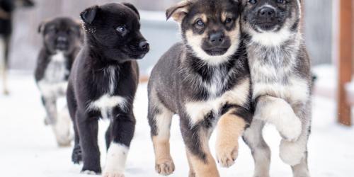 Dog Sledding | Visit Anchorage