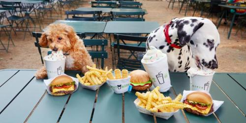 shake shack with dog