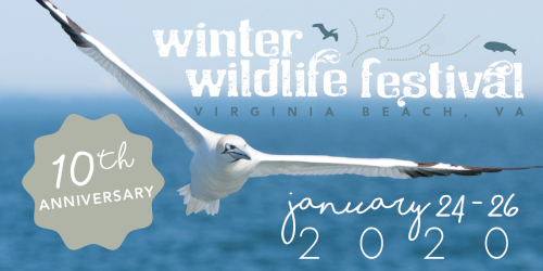 Winter Wildlife Festival