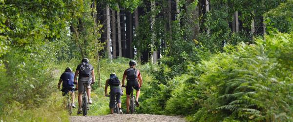 Group biking on gravel trail through park forest