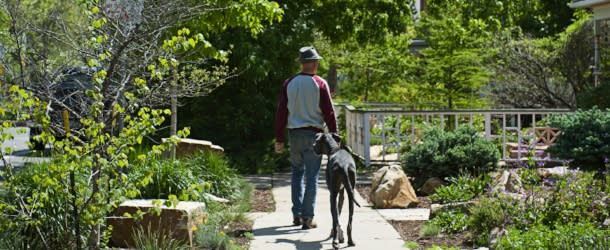 Man walking with dog in a Boulder Neighborhood