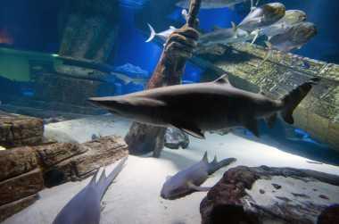 Animals & Zoos in New York | Aquarium of Niagara & More