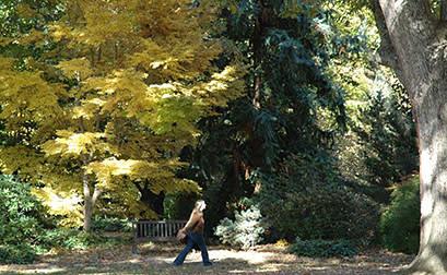 Coker Arboretum