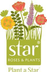 Plant a Star