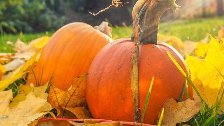 Pumpkin in field