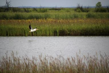 The natural beauty of Oak Hammock Marsh