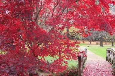 Hurley Park Photos 08 001.JPG