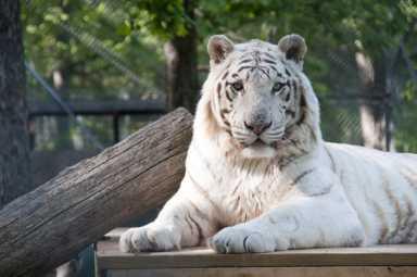 Tiger World