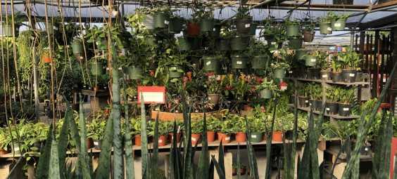 family tree nursery overland park plants