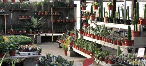 family tree nursery overland park tropical plants