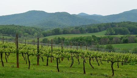 Virginia vineyard and mountains