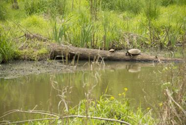 Turtles at Newman Wetlands Center