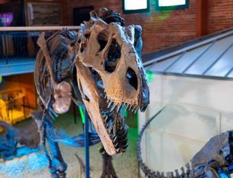 Ivan the T. rex