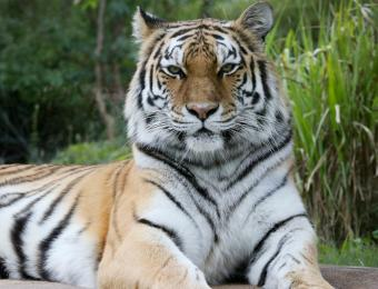 Slawson Family Tiger Trek
