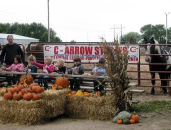 Pumpkin Patch at C-Arrow Stables