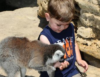 Feed the lemurs at Tanganyika Wildlife Park