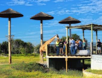 Tanganyika giraffes Visit Wichita