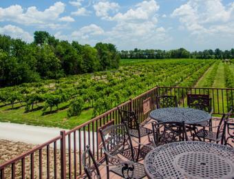 Grace Hill Winery Vineyard