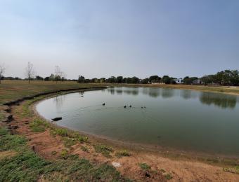 Harrison Park Pond