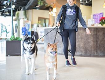 Sydney's huskey Visit Wichita