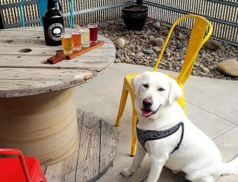 Inspirit Kombucha Brewing Co. pet friendly