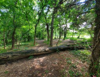 Oak Park Woods