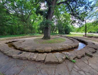 Oak Park Tree