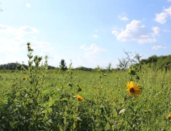 Pawnee Prairie Park Flowers