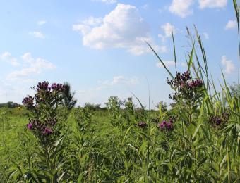Pawnee Prairie Park WildFlowers