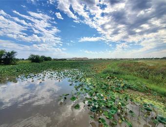 Pracht Wetlands