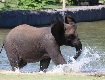 Sedgwick County Zoo Elephant