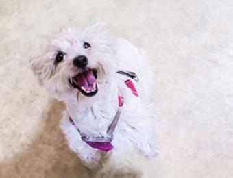Sydney's small dog Visit Wichita
