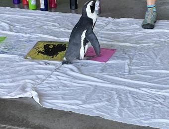 Tanganyika Penguin Painting
