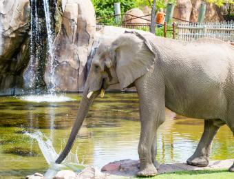Elephants of the Zambezi River Valley