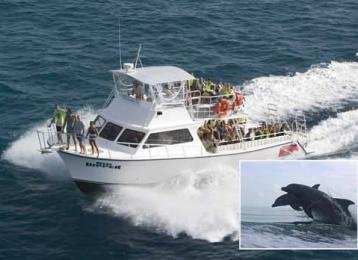 Dolphin Tours And Eco L Visit