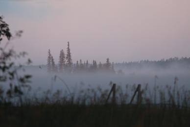 Misty morning at Falcon Trails Resort